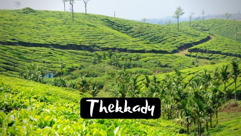 Read more about the article 11 Famous Tourist Places to visit in Thekkady for Incredible Experience